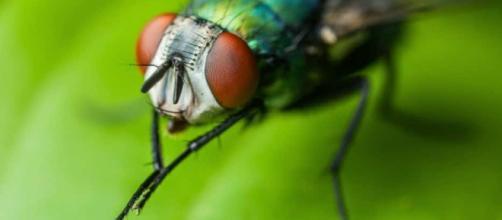 Por qué las moscas se frotan las patas: Conoce las razones - hablemosdeinsectos.com