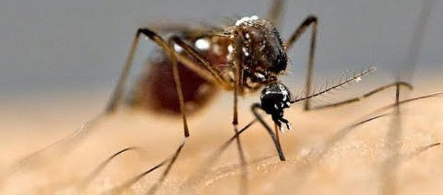 Ten reasons why mosquitoes bite some people but not others [Image: Veritasium/YouTube screenshot]