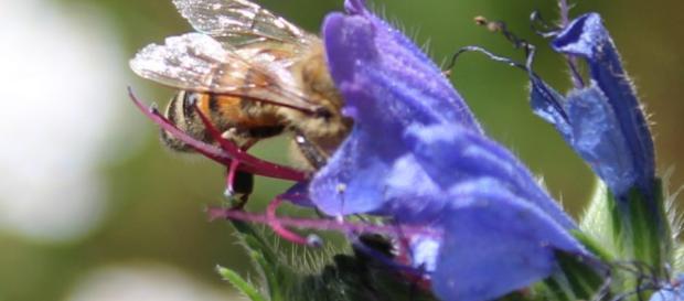 el uso de una herramienta de imágenes para evaluar la biodiversidad es más efectivo que los métodos tradicionales