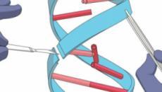 Novità nella tecnica Crispr: ricercatori americani migliorano la forbice molecolare