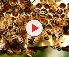 Su 'Science': 'Le api sono in grado di rappresentare e interpretare il concetto di zero'.