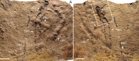 In Cina è stata ritrovata la prima impronta animale della Terra - tpi.it