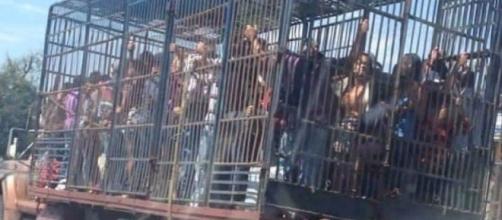 Venezuela/ Las perreras: el nuevo transporte público que está circulando por las calles