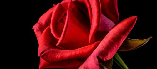 This week's episode of 'The Bachelorette' ends with no rose ceremony. - [Photo via Pixa Here / Creative Commons]