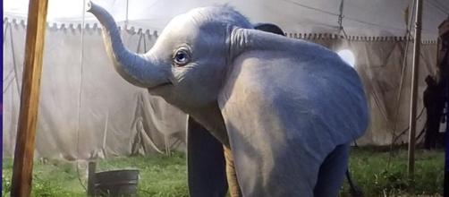 Dumbo live-action remake dalla penna di Tim Burton e Disney