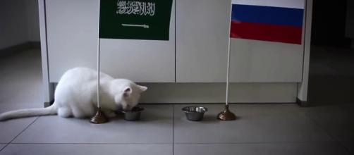 Achilles the 'psychic cat' lives in St. Petersburg, Russia and will be making 2018 FIFA World Cup predictions. - [ESPN UK / YouTube screencap]