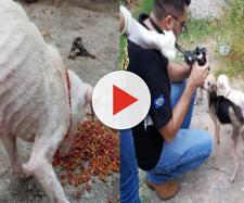 Os cães de porte pequeno e médio, passavam fome e estavam presos dentro da casa há vários dias