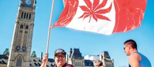 CANADÁ/ el senado decidió legalizar la marihuana