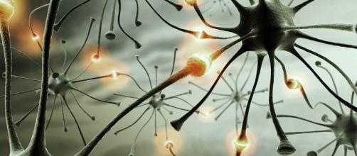 Las neuronas están implicadas en la comunicación del cerebro. Public Domain.