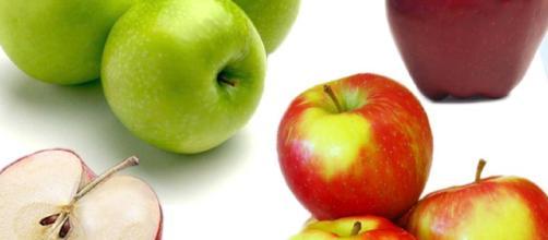 Mela - Tutto sul frutto più famoso   Alimentipedia: enciclopedia ... - alimentipedia.it