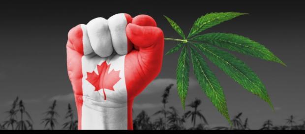 Canada legalizza marijuana per uso ricreativo: ok del Parlamento.