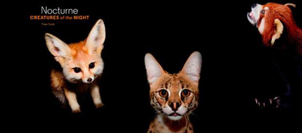 Los animales se hacen nocturnos para no coincidir con los humanos
