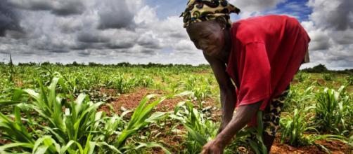 Cameroun : ouverture du Salon de l'agriculture consacré à la ... - rfi.fr