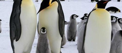 AUSTRALIA / Hombre es condenado a 49 horas de servicio comunitario por matar a 6 pingüinos