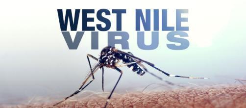 Rovigo, uomo positivo al virus West Nile: ricoverato presso il reparto malattie infettive