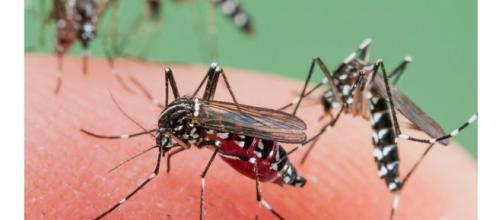 Odiose zanzare banchettano sulla nostra pelle: ecco come fare per eliminarle ed i rimedi naturali repellenti più efficaci