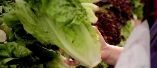 Usa, lattuga con e-coli: 5 morti