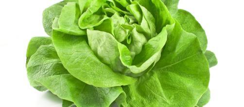 Usa, lattuga contaminata: cinque morti per via dall'e-coli