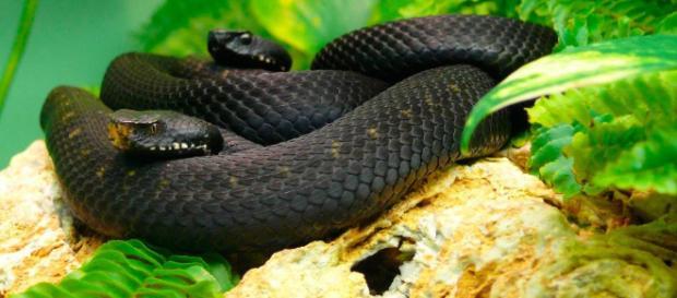 Las serpientes más venenosas del mundo - animalesextremos.com
