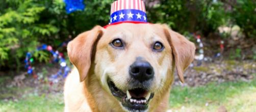 Don't forget about your pets this Fourth of July! - [ASPCA / YouTube screencap]