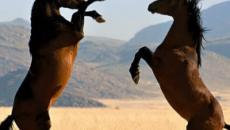 ADN antiguo explica el árbol genealógico del caballo