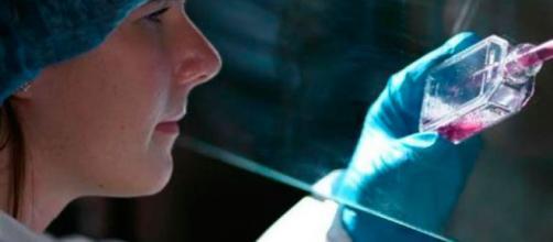 Asesorías Académicas Milton Ochoa - Molécula de las células madre ... - com.co