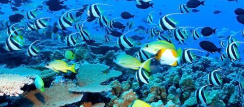 Giornata mondiale dell'ambiente: la lotta alla plastica è il tema principale