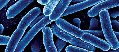 El hallazgo podría ayudar a los investigadores que intentan tratar una variedad de condiciones agregando microbios al cuerpo humano