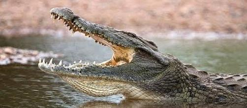 Pastor killed by crocodile during baptism of 80 people in a lake. [Image: Trending Now/YouTube screenshot]
