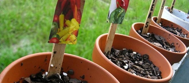 Hortas urbanas: O cultivo de plantas e temperos em apartamentos é possível