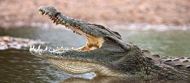 Ethiopia/ Pastor dies after being bitten by crocodile during a mass baptism in Lake Abaya