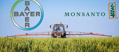 Oggi Bayer e Monsanto diventano un'unica multinazionale
