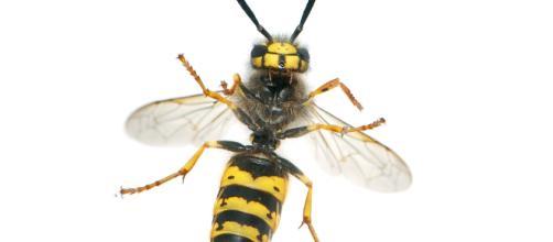 Punto da una vespa un uomo di 55 anni è morto ieri per uno shock anafilattico.