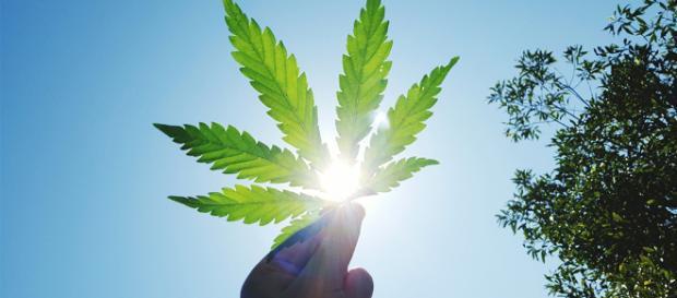 Il Canada è pronto a legalizzare la cannabis per uso ricreativo