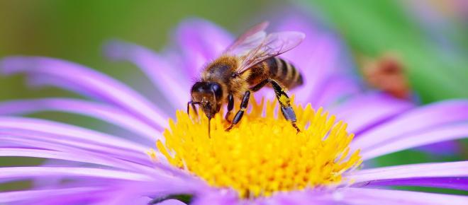 Le api sanno cos'è lo zero: uno studio degli scienziati australiani lo dimostra
