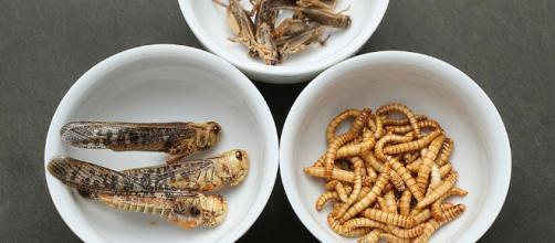 Cientistas dizem que comer insetos pode ser uma boa fonte de proteínas.