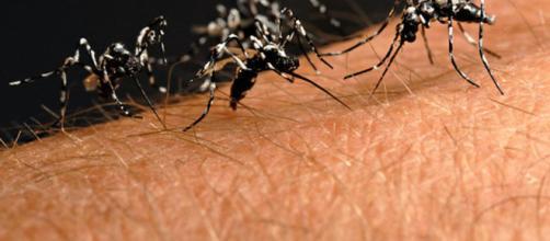 Veneto: Virus West Nile. Attenzione alle zanzare