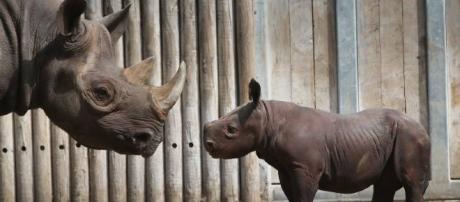 La extinción de especies está sucediendo 1000 veces más rápido de lo normal