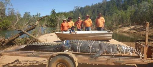 AUSTRALIA / Capturado cocodrilo de casi 5 metros después de 9 años de búsqueda