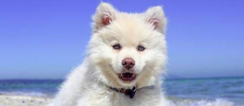 Treni, dal primo agosto l'offerta per i cani di media e grande taglia a 5 euro