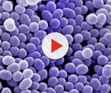 Batteri resistenti agli antibiotici: quello che c'è da sapere ... - focus.it