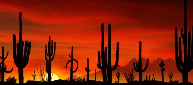 Ondata di caldo eccezionale nel deserto del Sahara.