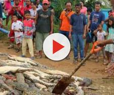 Strage in Nuova Guinea di coccodrilli protetti