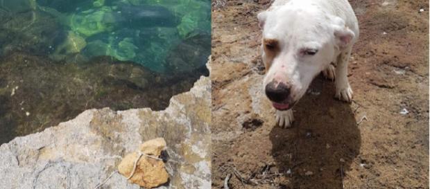 Trapani: lega pietra al collo del cane e lo butta in mare - Facebook
