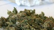 Coltiva marijuana nell'orto in Sardegna: 'Non pensavo fosse illegale'