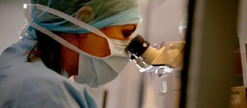 Si apre la strada verso l'ovaio artificiale umano,contro l'infertilità da cure oncologiche