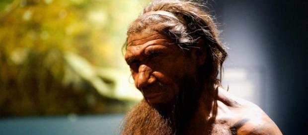 Investigadores crean cerebros de neandertales