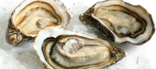 Mangia ostriche crude e muore dopo due giorni