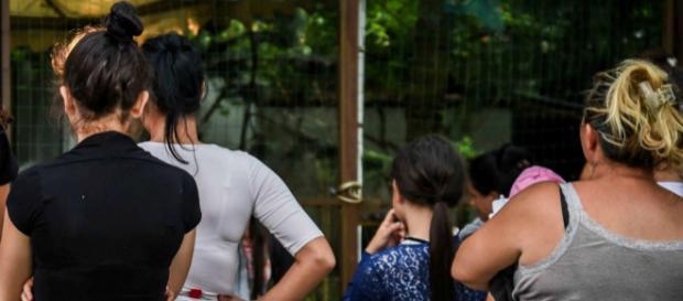 Rom di un anno ferita da un piombino: aperto fascicolo contro ignoti | adnkronos.com