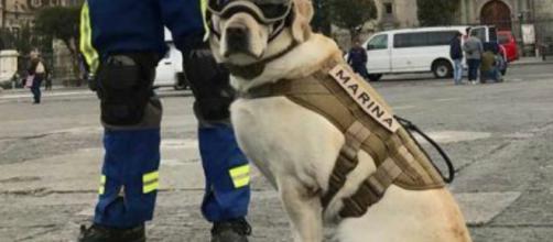 Homenaje a Frida, la perra rescatista del terremoto en México